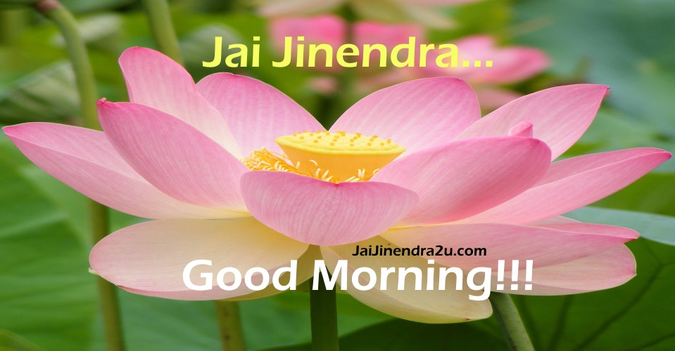 Jai Jinendra - Good Morning Wallpaper With Beautiful Pink Flower And Green Leaves
