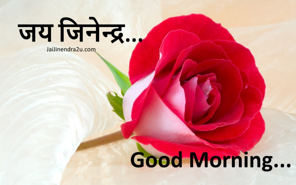 Jai Jinendra - Good Morning Wallpaper With Rose Flower