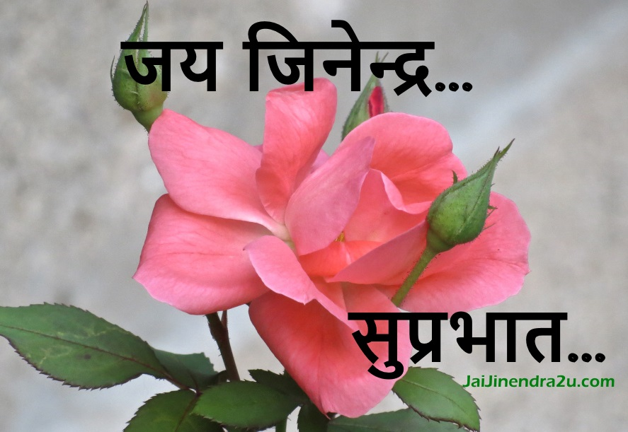 Jai Jinendra - Suprabhat Wallpaper With Pink Flowers