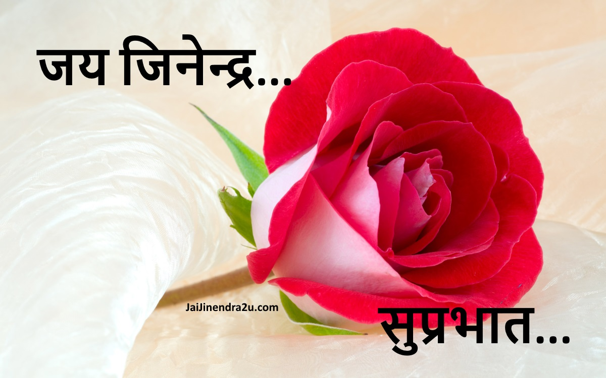 Jai Jinendra - Suprabhat Wallpaper With Rose Flower