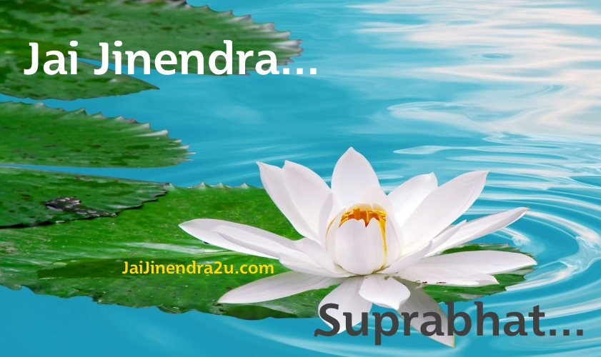 Jai Jinendra - Suprabhat Wallpaper With White Lotus Flowers In Water