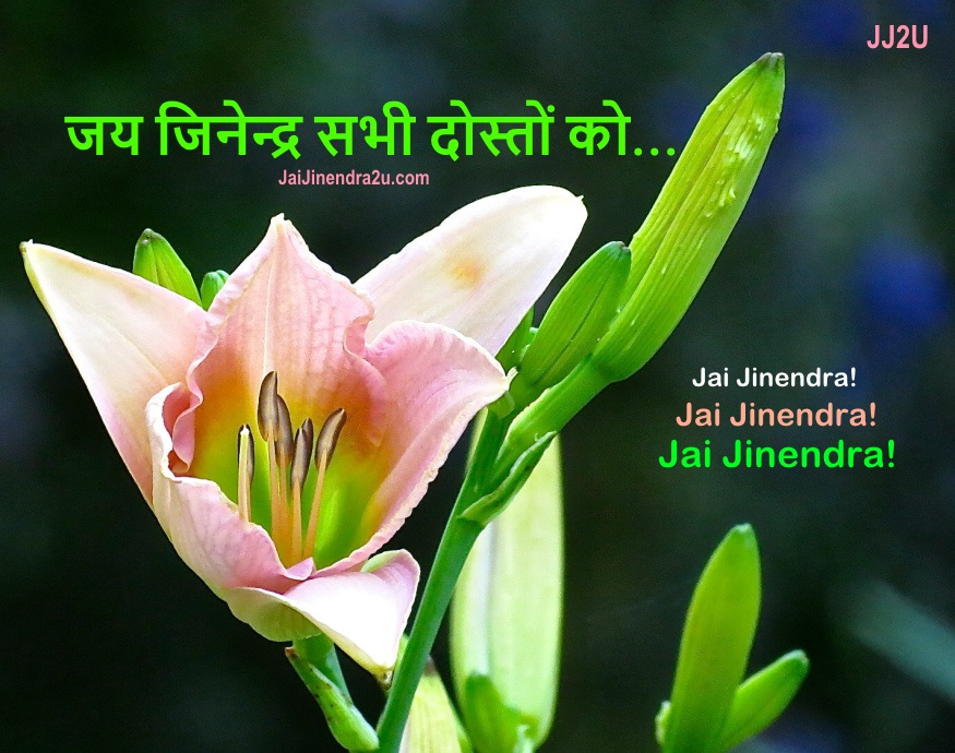 Jai Jinendra Wallpaper For Greeting All Friends - sabhi dosto ko -  hindi  - 1